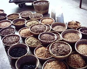 סוגים שונים של צמחי מרפא סיניים